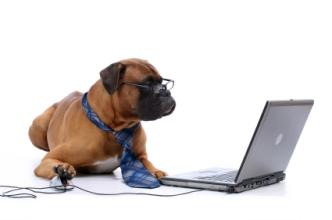DMR Old Dog - New Tricks